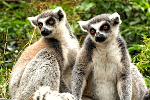 Madagascar Tours Huge Discounts On Madagascar Vacations - Madagascar vacation