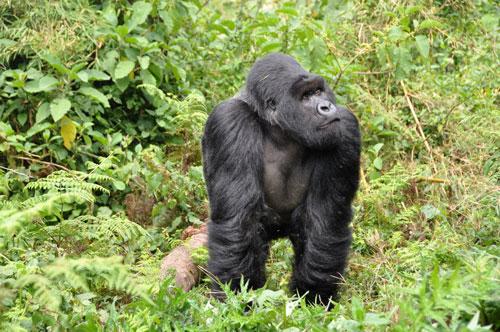 Rwanda Image