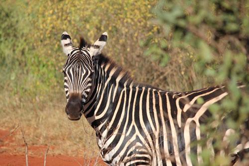 Kenya Image