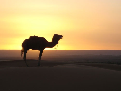 Morocco Tours Huge Discounts On Morocco Vacations Morocco Travel - Morocco tours