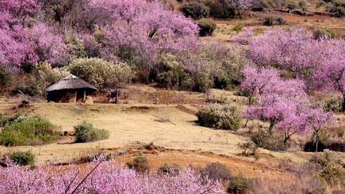 Lesotho Image