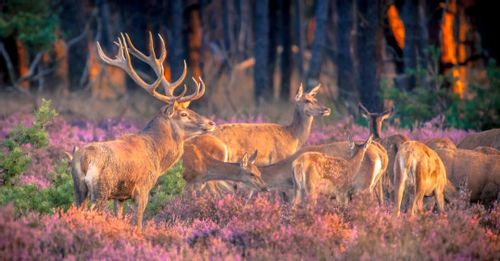 Escape to the Hoge Veluwe National Park