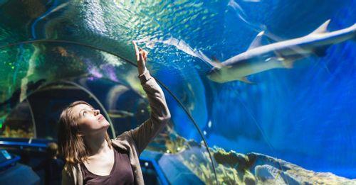 See the Audubon Aquarium of the Americas