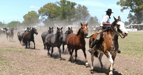 Ride Horses at an Argentine Estancia