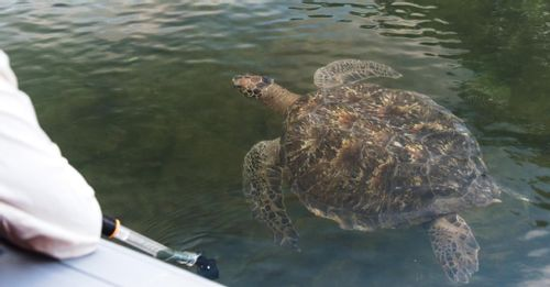 See wildlife at Black Turtle Cove