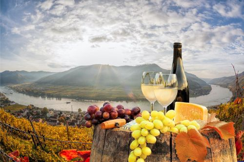 Tour Wachau Valley Wineries