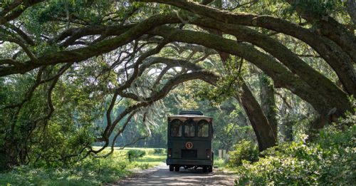 Learn about tea at the Charleston Tea Plantation