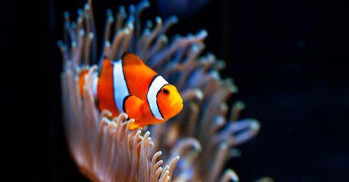 Visit the Aquarium of the Pacific