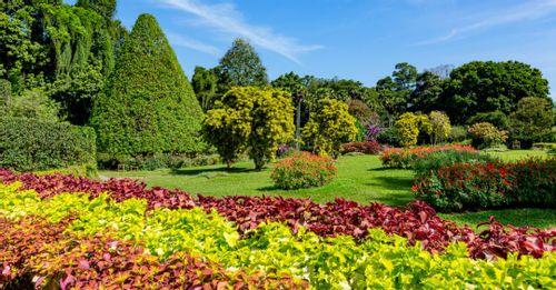 Peradeniya Royal Botanical Gardens - Kandy