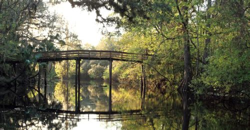 Walk through Hillsborough River State Park