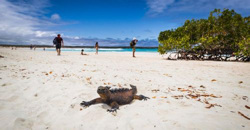 See the turtles at Tortuga Bay