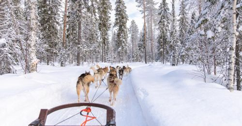 Pay a visit to the Lapland