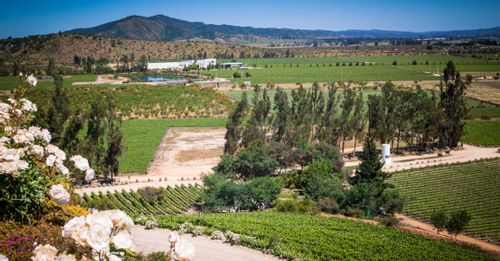 Taste delicious wines in the Casablanca Wine Region
