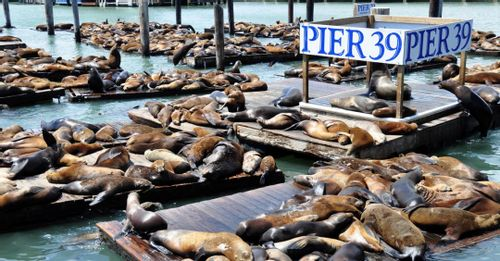 Get great city views from PIER 39