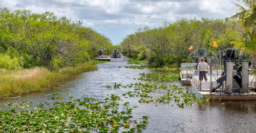 See the wildlife in the Everglades