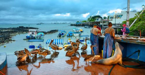 Learn from the fisherman at the Fish Market of Puerto Ayora