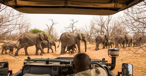 Go on a wildlife excursion through the Chobe National Park