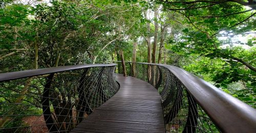 Visit Kirstenbosch, Cape Town, South Africa