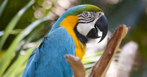 See animals at the Jacksonville Zoo and Gardens