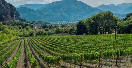 Santo's Winery