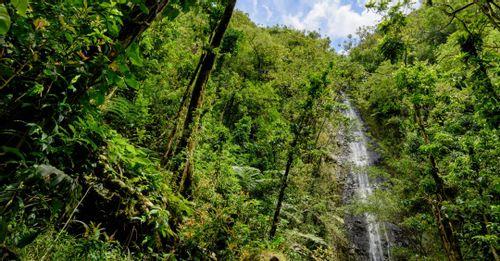 Head to Manoa Falls