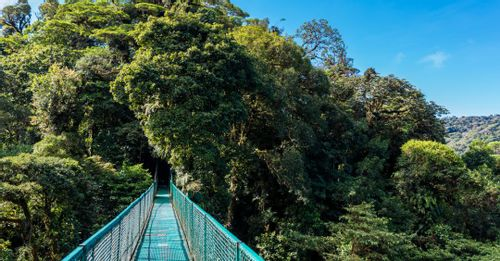 Walk on the suspension bridges at Selvatura Park