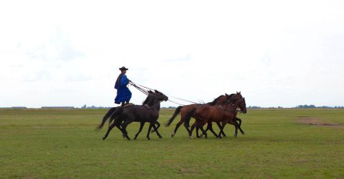 Watch Outstanding Horsemanship in the Hungarian Puszta
