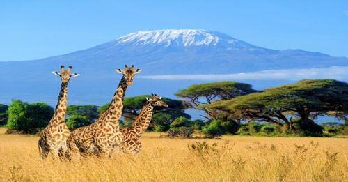 Wildlife Watching at Kilimanjaro, Tanzania