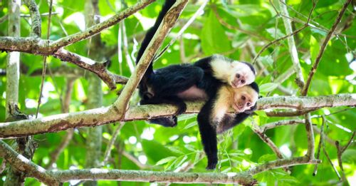 Adventure through Tortuguero National Park