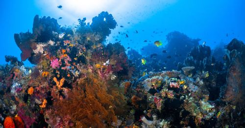 Swim the fishes and other marine life while exploring the underwater world of the Great Barrier Reef