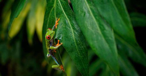 Pura Vida Gardens (Costa Rica)