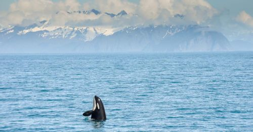 Go on a whale-watching cruise