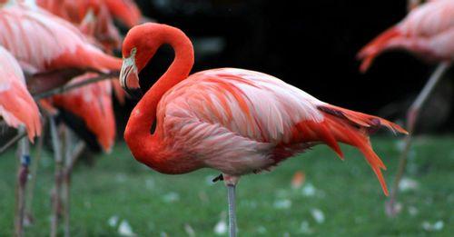Walk through Flamingo Gardens