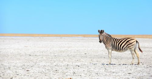 Experience the vast landscape of the Makgadikgadi Salt Pans