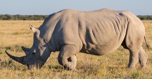 Witness the abundance of rhinos thriving within the Kharma Rhino Sanctuary