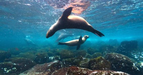 Go snorkeling