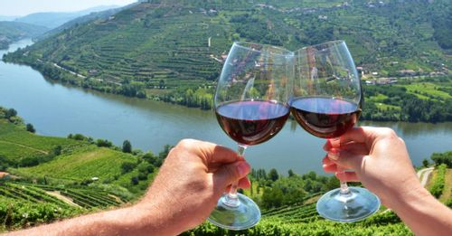 Go Wine Tasting in the Douro Valley