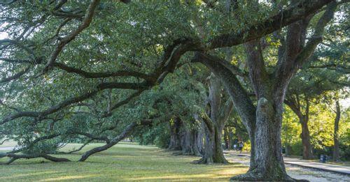 Relax in Audubon Park