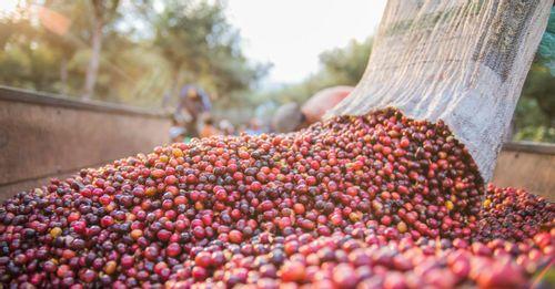 Try Guatemalan Coffee