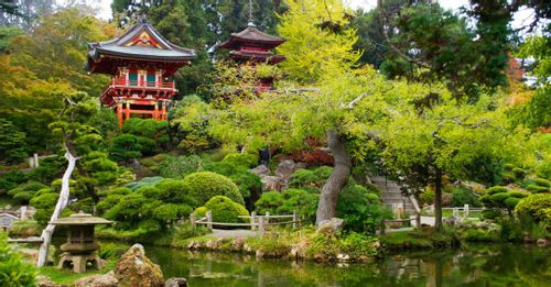 Visit the Japanese Tea Garden