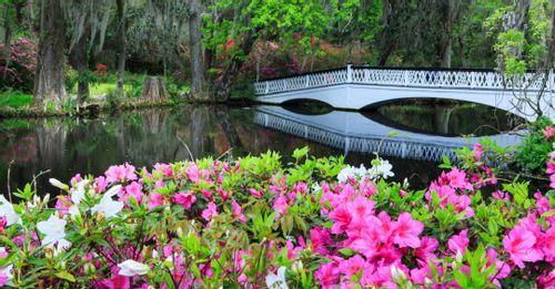Explore Magnolia Plantation & Gardens