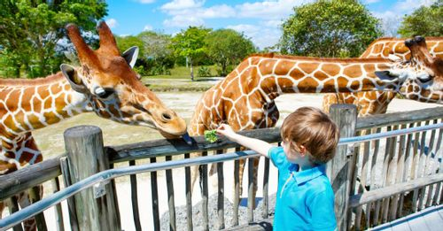 See the animals at Zoo Miami