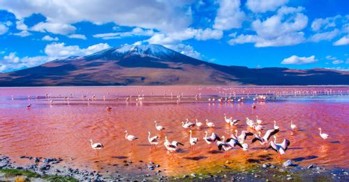 Birdwatch the abundance of flamingos dwelling around the Laguna Colorada