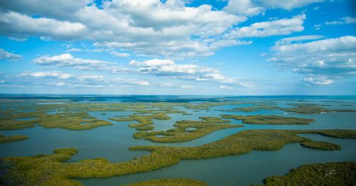 Tour Everglades National Park