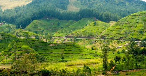 Tea Country - Central and Southern Sri Lanka