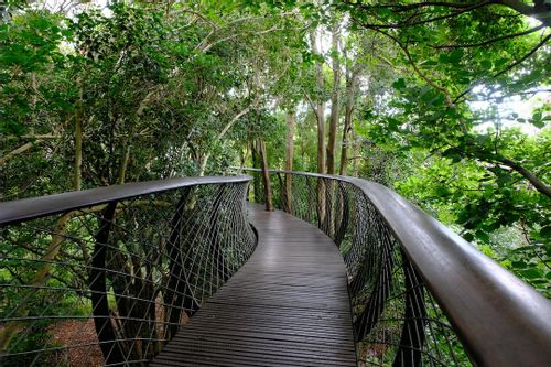Visit Kirstenbosch, Cape Town, South Africa