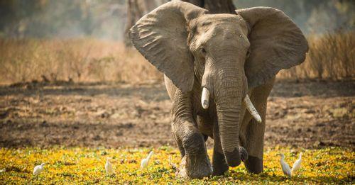 Hwange Safari