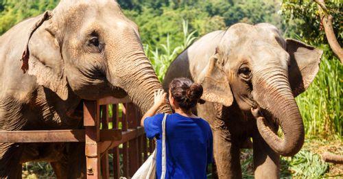 Trip to the Elephant Sanctuary to play with elephants