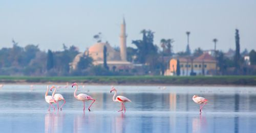 Go Bird Watching at Larnaca Salt Lake